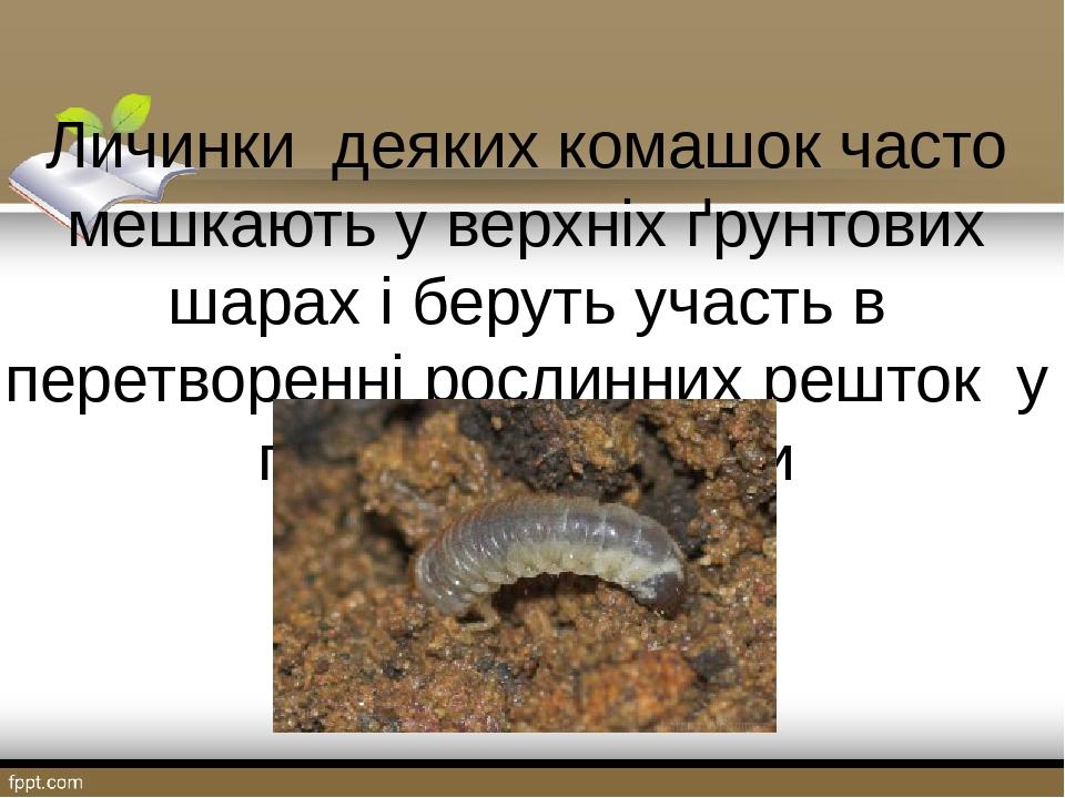 Личинки деяких комашок часто мешкають у верхніх ґрунтових шарах і беруть участь в перетворенні рослинних решток у поживні речовини