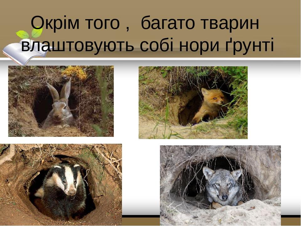 Окрім того , багато тварин влаштовують собі нори ґрунті