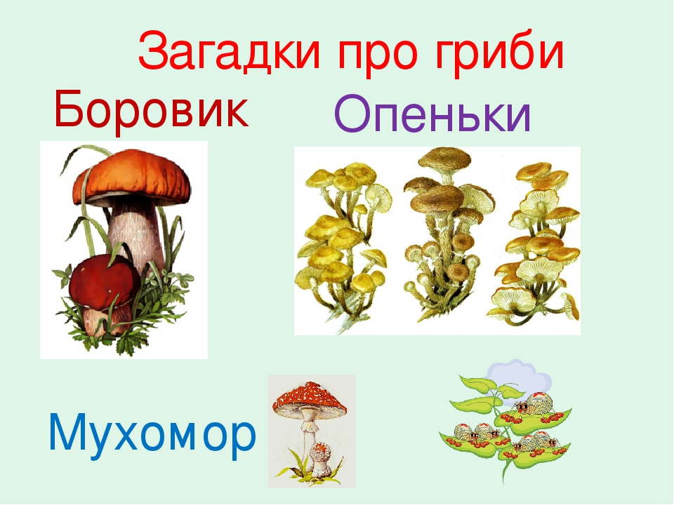 Загадки про гриби Боровик Опеньки Мухомор