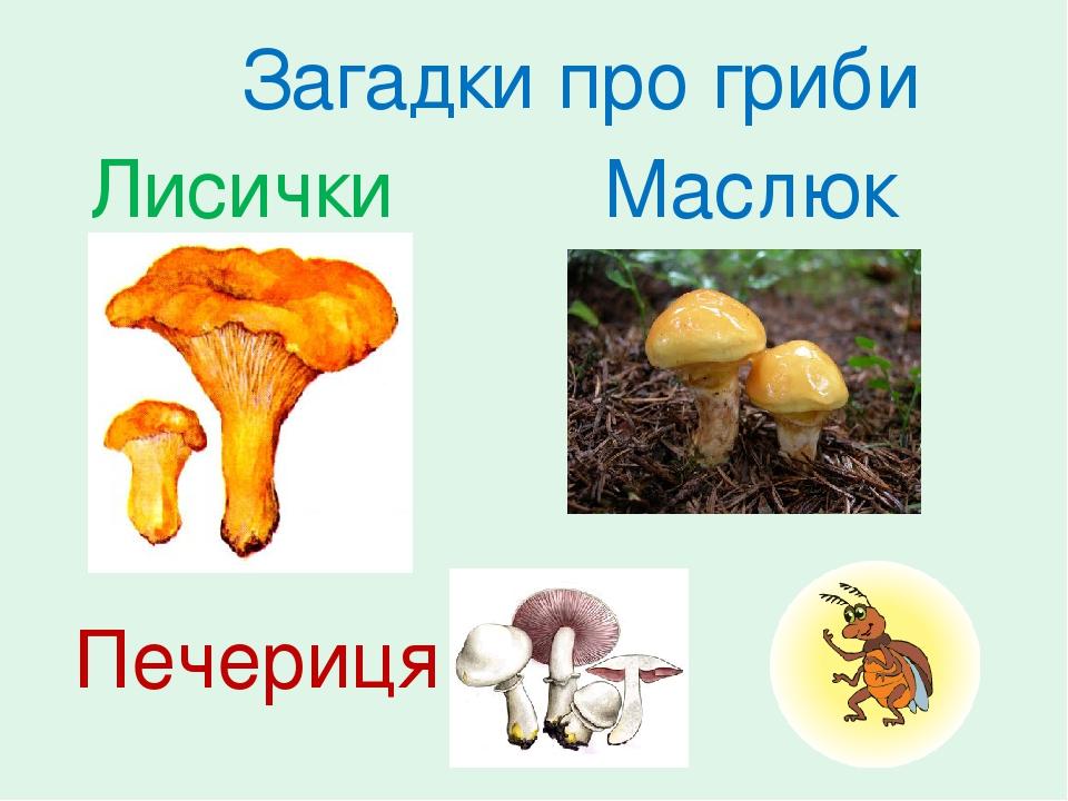 Лисички Маслюк Печериця Загадки про гриби