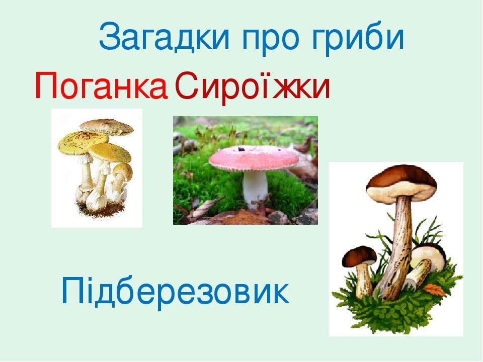 Поганка Сироїжки Підберезовик Загадки про гриби