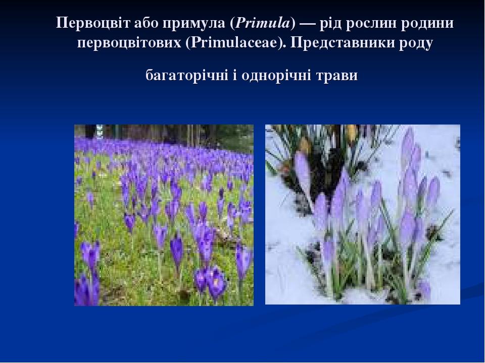 Первоцвіт або примула (Primula)— рід рослин родини первоцвітових (Primulaceae). Представники роду багаторічні і однорічні трави