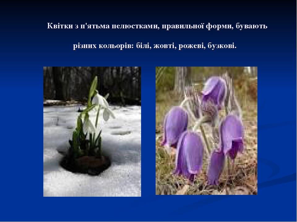 Квітки з п'ятьма пелюстками, правильної форми, бувають різних кольорів: білі, жовті, рожеві, бузкові.
