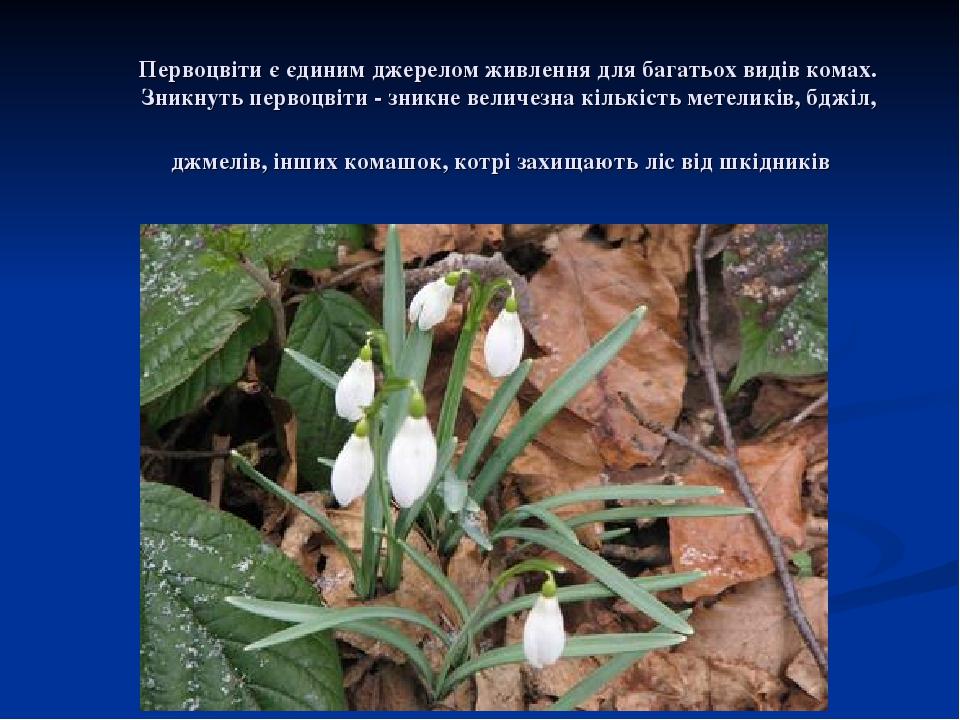 Первоцвіти є єдиним джерелом живлення для багатьох видів комах. Зникнуть первоцвіти - зникне величезна кількість метеликів, бджіл, джмелів, інших к...