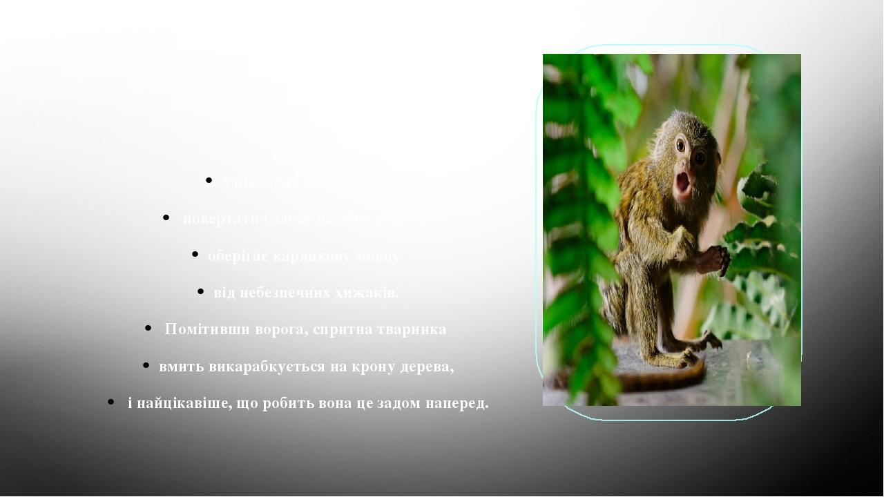 Як ігрунка себе захищає? Унікальна властивість повертати голову на 180 градусів оберігає карликову мавпу від небезпечних хижаків. Помітивши ворога,...