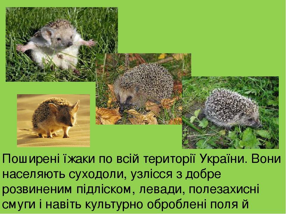 Поширені їжаки по всій території України. Вони населяють суходоли, узлісся з добре розвиненим підліском, левади, полезахисні смуги і навіть культур...