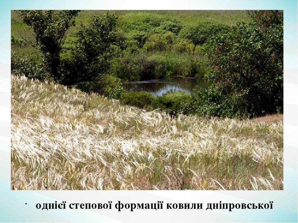 однієї степової формації ковили дніпровської