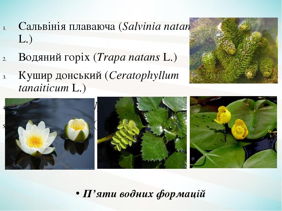 Сальвінія плаваюча (Salvinia natans L.) Водяний горіх (Trapa natans L.) Кушир донський (Ceratophyllum tanaiticum L.) Латаття біле (Nymphaea alba L....