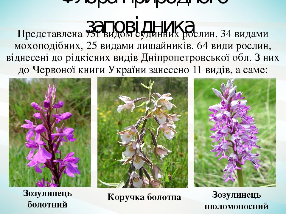 Представлена 731 видом судинних рослин, 34 видами мохоподібних, 25 видами лишайників. 64 види рослин, віднесені до рідкісних видів Дніпропетровсько...
