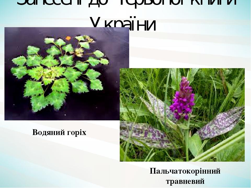 Пальчатокорінний травневий Водяний горіх Занесені до Червоної книги України