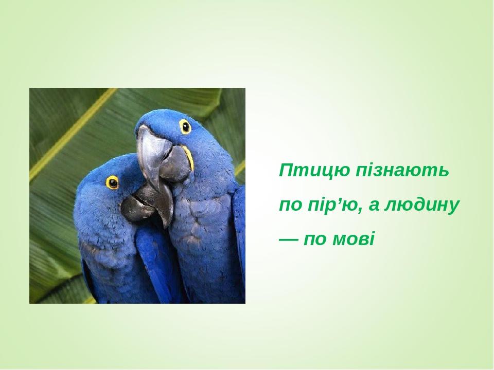 Птицю пізнають по пір'ю, а людину — по мові