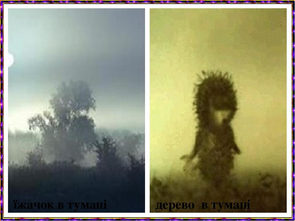 дерево в тумані їжачок в тумані