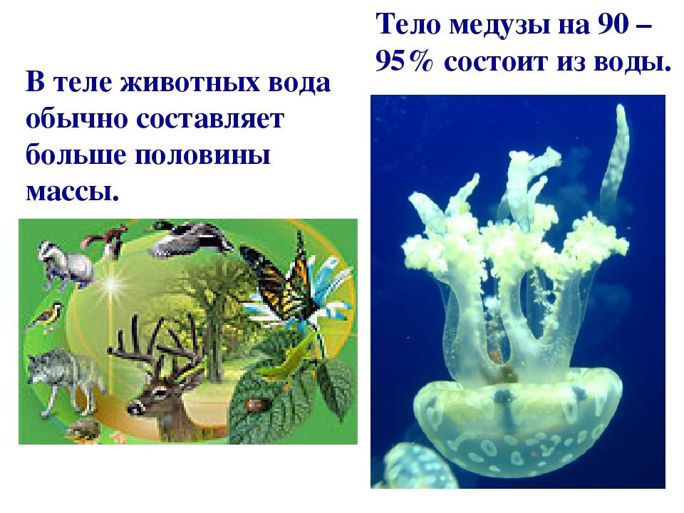 Тело медузы на 90 – 95% состоит из воды. В теле животных вода обычно составляет больше половины массы.