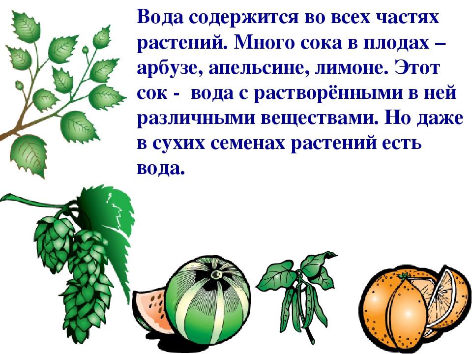Вода содержится во всех частях растений. Много сока в плодах – арбузе, апельсине, лимоне. Этот сок - вода с растворёнными в ней различными вещества...