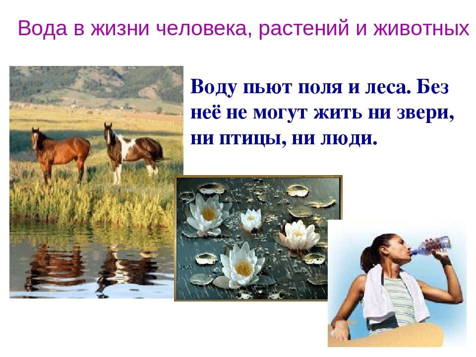 Вода в жизни человека, растений и животных Воду пьют поля и леса. Без неё не могут жить ни звери, ни птицы, ни люди.