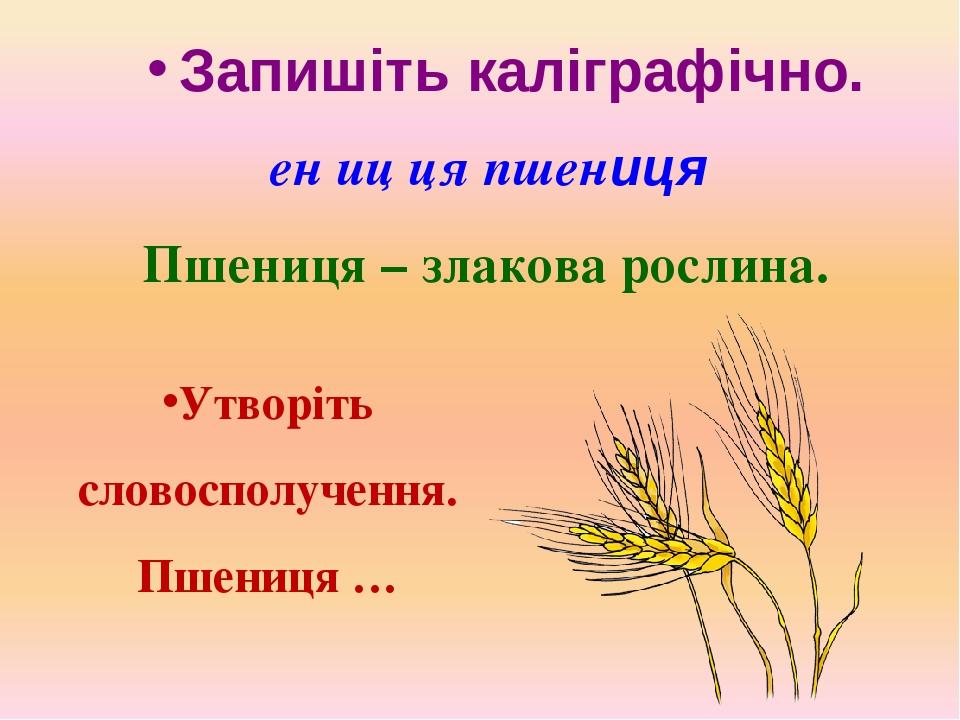 Запишіть каліграфічно. ен иц ця пшениця Пшениця – злакова рослина. Утворіть словосполучення. Пшениця …