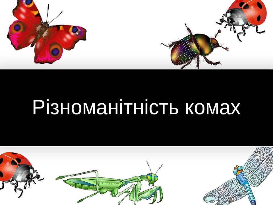 Різноманітність комах www.PresentationPro.com