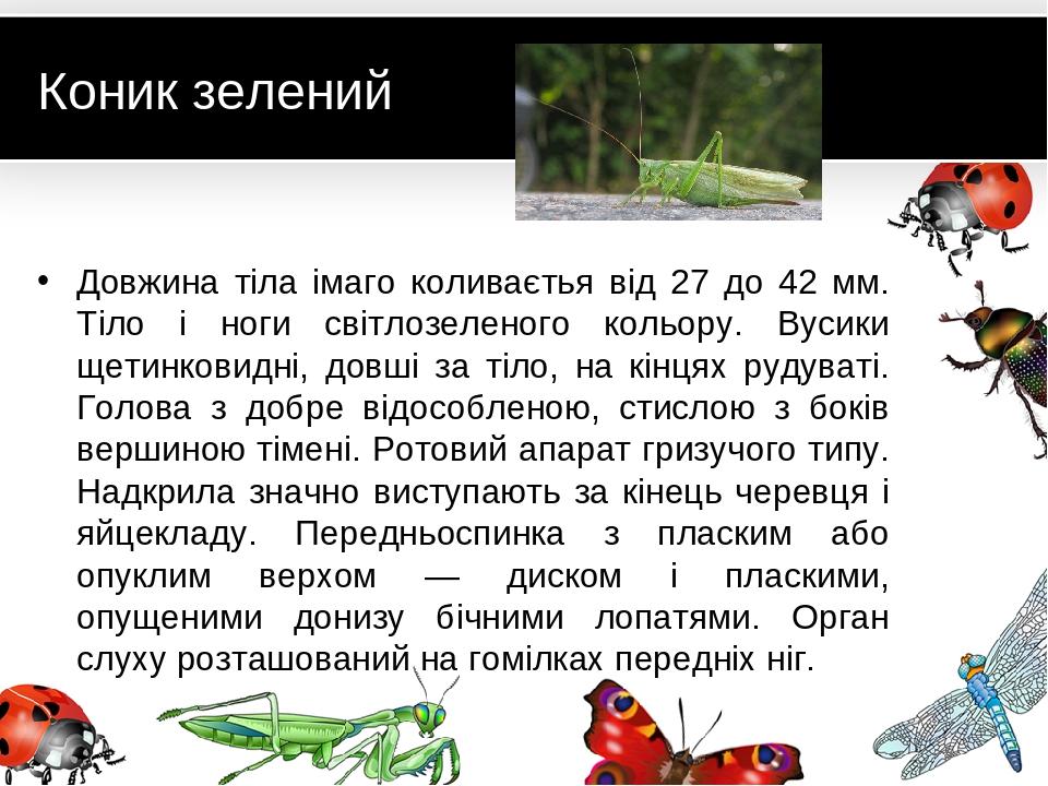 Коник зелений Довжина тіла імаго коливаєтья від 27 до 42 мм. Тіло і ноги світлозеленого кольору. Вусики щетинковидні, довші за тіло, на кінцях руду...