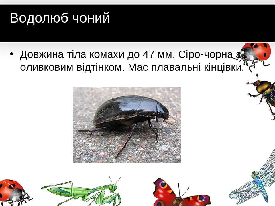 Водолюб чоний Довжина тіла комахи до 47 мм. Сіро-чорна з оливковим відтінком. Має плавальні кінцівки.