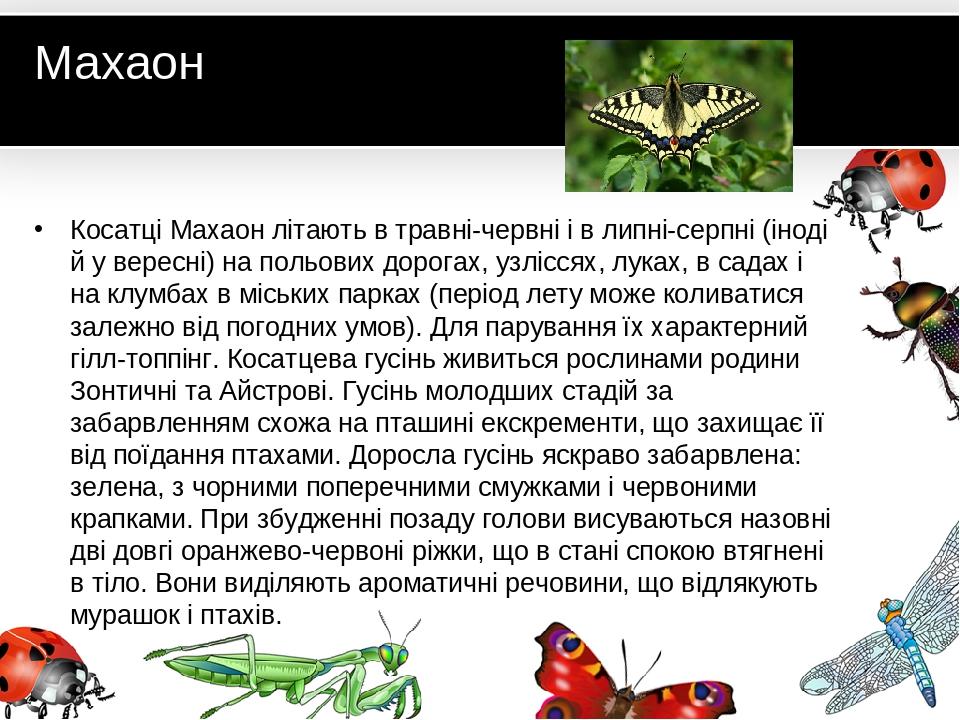 Махаон Косатці Махаон літають в травні-червні і в липні-серпні (іноді й у вересні) на польових дорогах, узліссях, луках, в садах і на клумбах в міс...