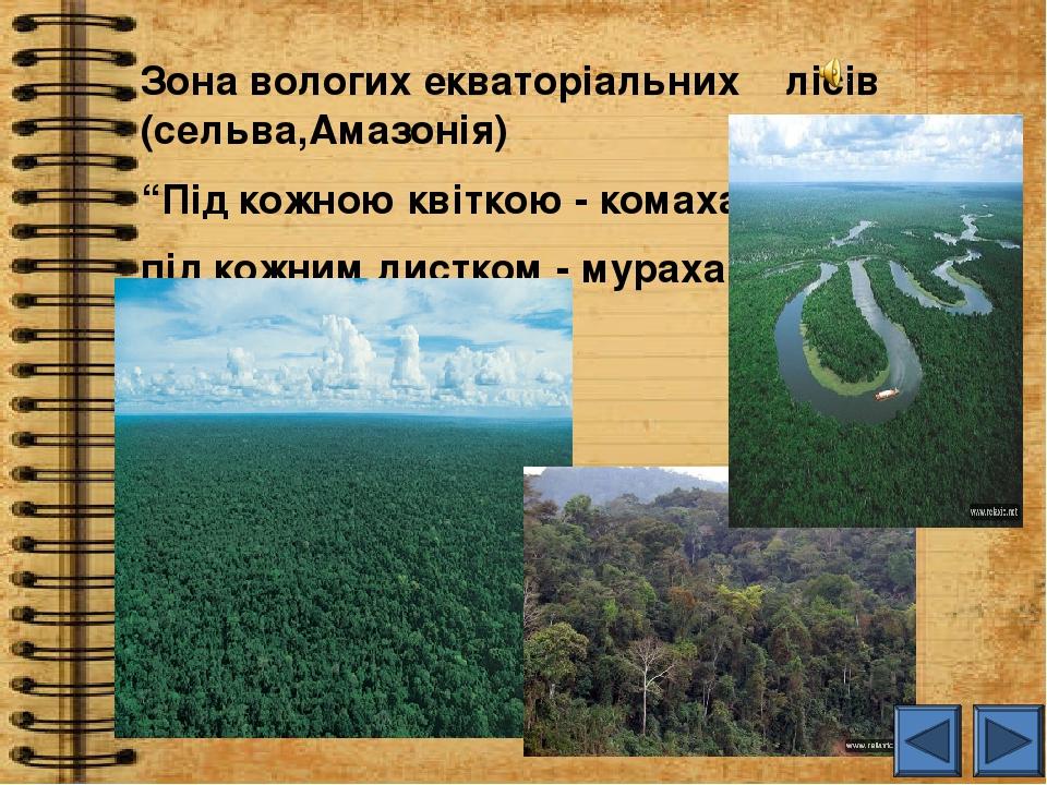 """Зона вологих екваторіальних лісів (сельва,Амазонія) """"Під кожною квіткою - комаха, під кожним листком - мураха """""""