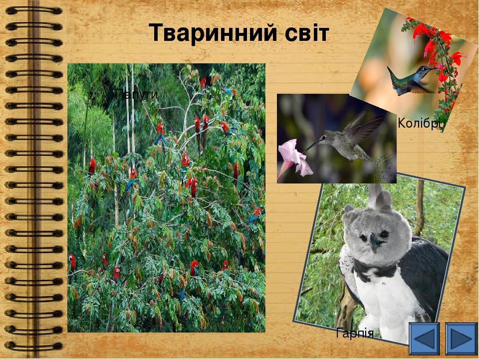Тваринний світ Гарпія Папуги Колібрі