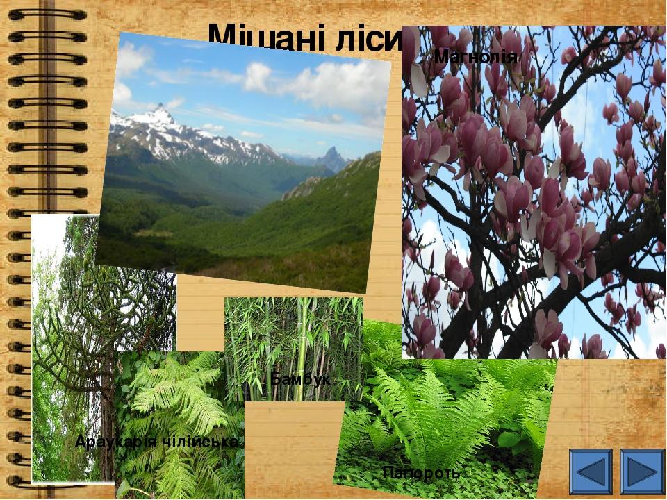 Мішані ліси Магнолія Араукарія чілійська Бамбук Папороть