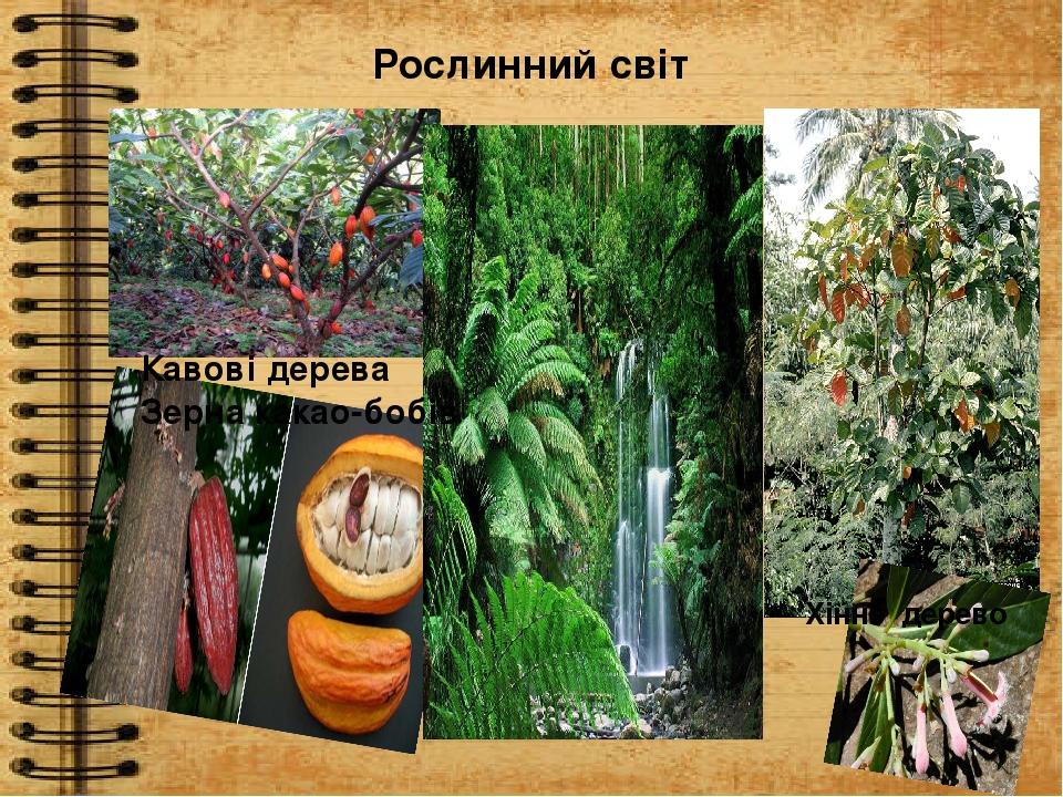 Рослинний світ Кавові дерева Зерна какао-бобів Хінне дерево