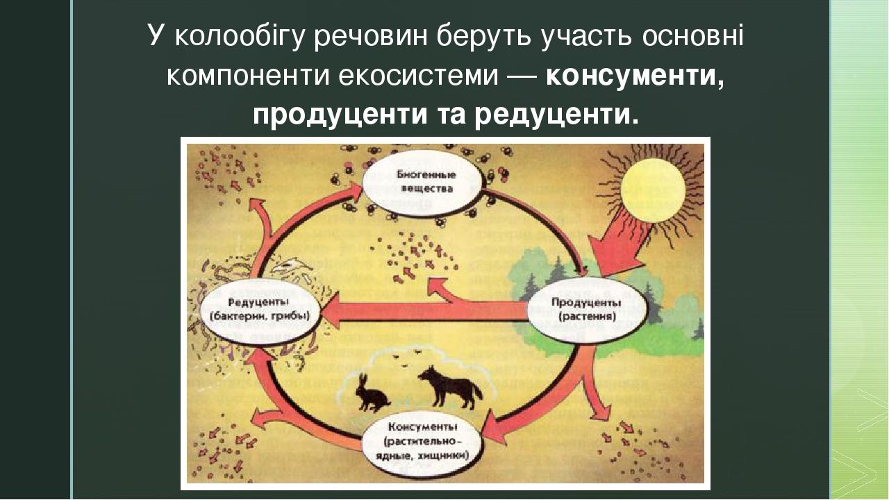 У колообігу речовин беруть участь основні компоненти екосистеми — консументи, продуценти та редуценти. z