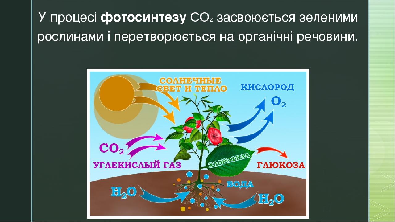 У процесі фотосинтезу СО2 засвоюється зеленими рослинами і перетворюється на органічні речовини. z