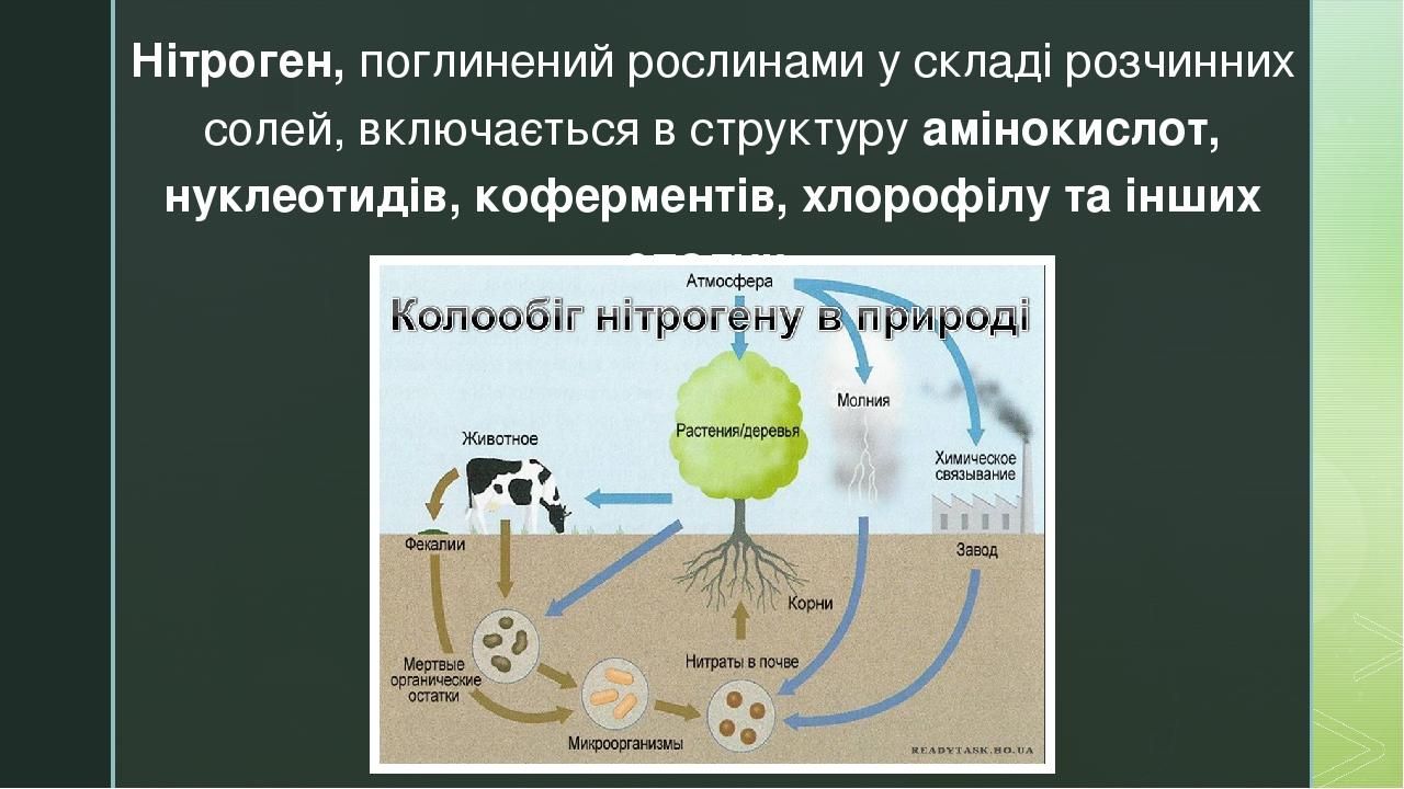 Нітроген, поглинений рослинами у складі розчинних солей, включається в структуру амінокислот, нуклеотидів, коферментів, хлорофілу та інших сполук. z