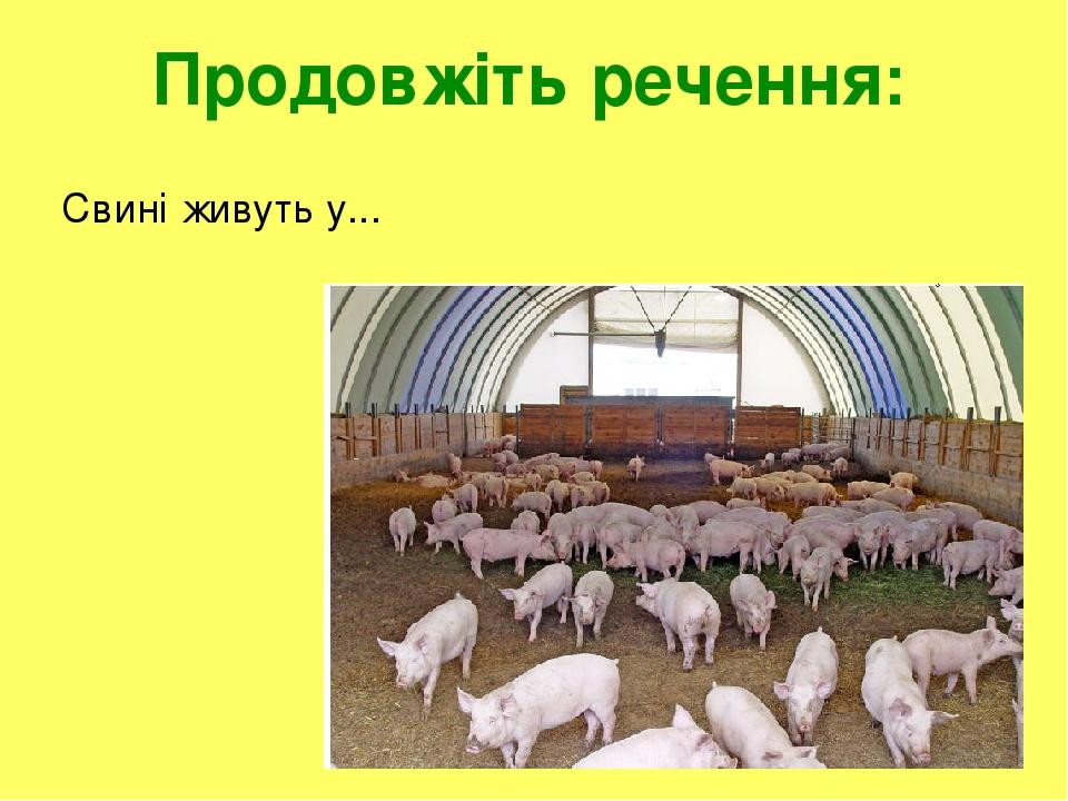 Продовжіть речення: Свині живуть у...