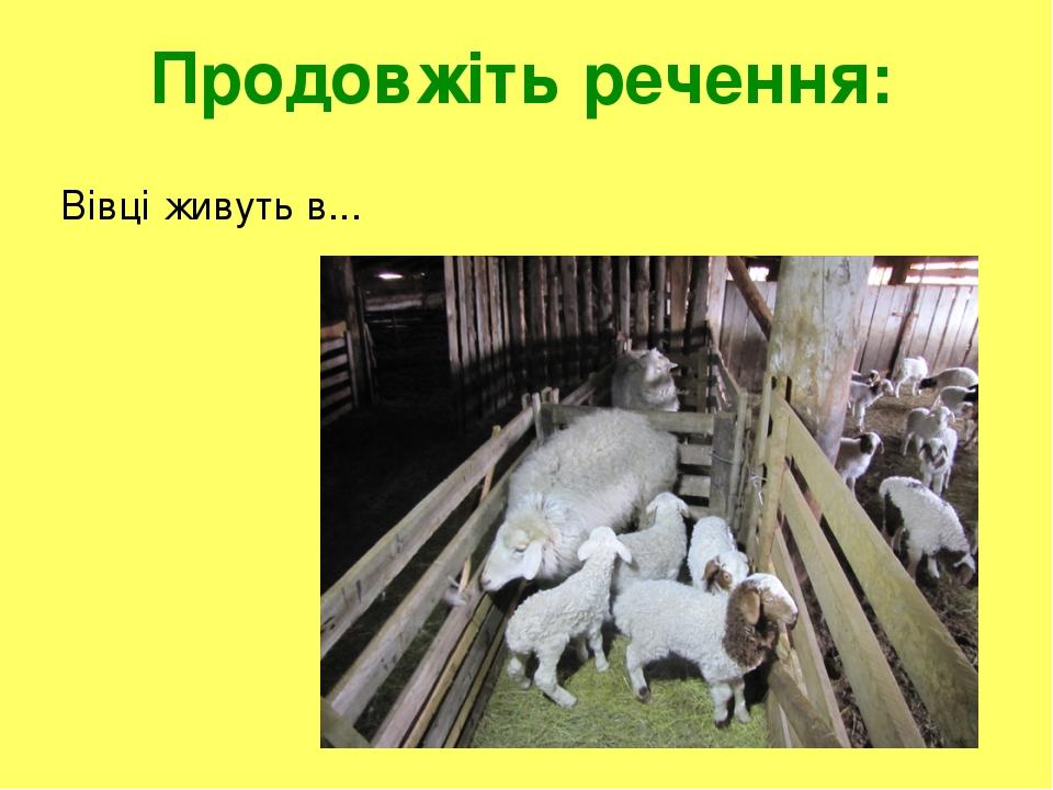 Продовжіть речення: Вівці живуть в...