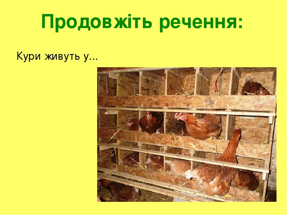 Продовжіть речення: Кури живуть у...