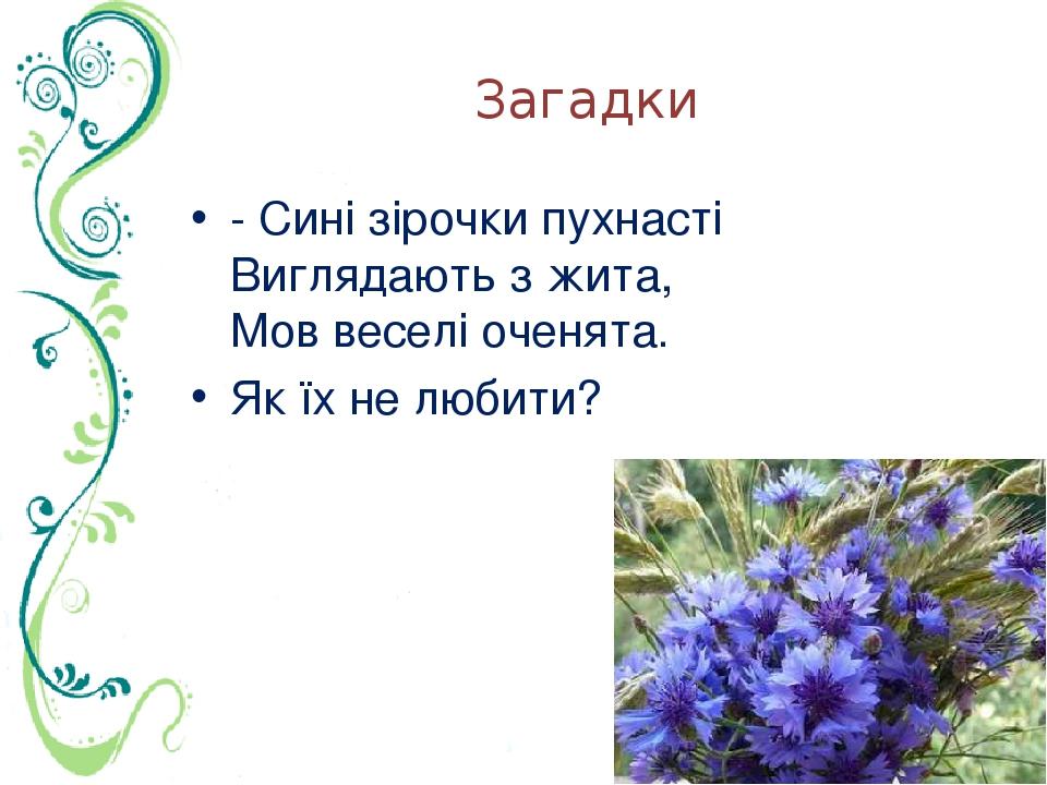 Загадки - Сині зірочки пухнасті Виглядають з жита, Мов веселі оченята. Як їх не любити?