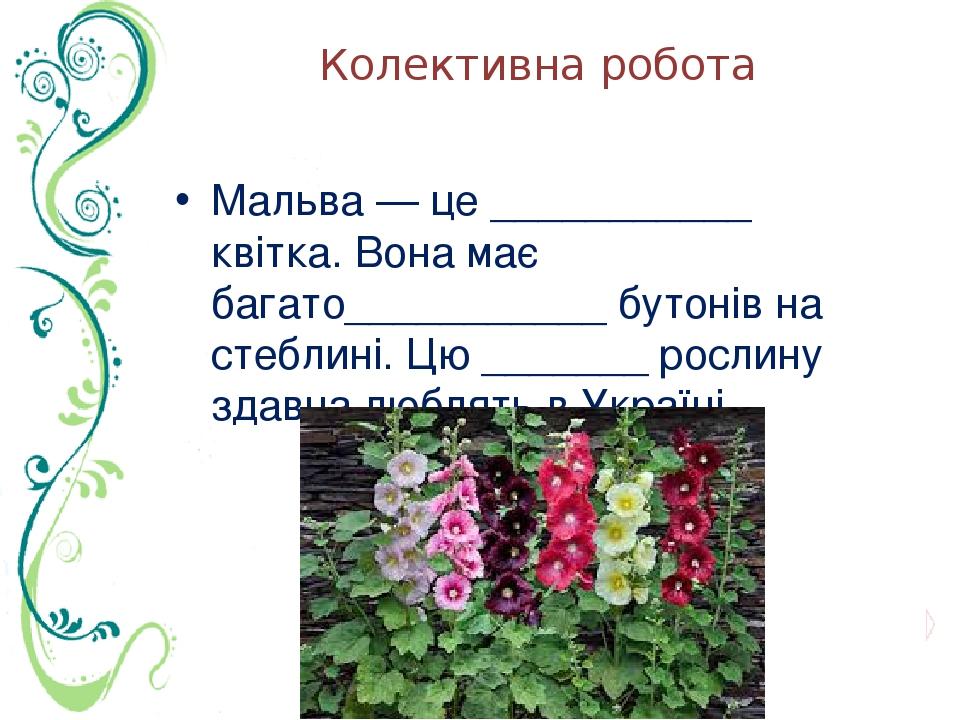 Колективна робота Мальва — це ___________ квітка. Вона має багато___________ бутонів на стеблині. Цю _______ рослину здавна люблять в Україні.