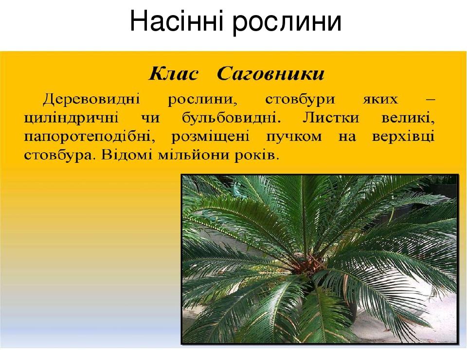 Насінні рослини