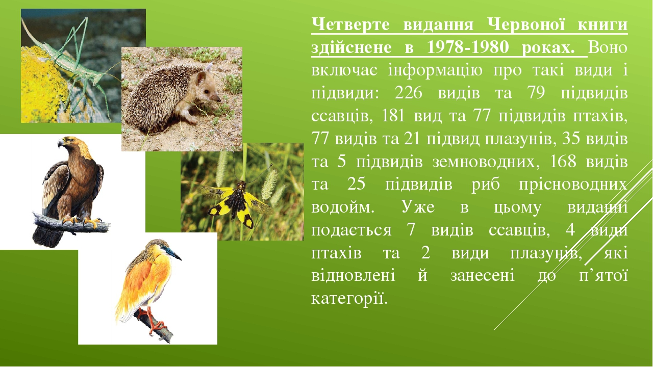 Четверте видання Червоної книги здійснене в 1978-1980 роках. Воно включає інформацію про такі види і підвиди: 226 видів та 79 підвидів ссавців, 181...