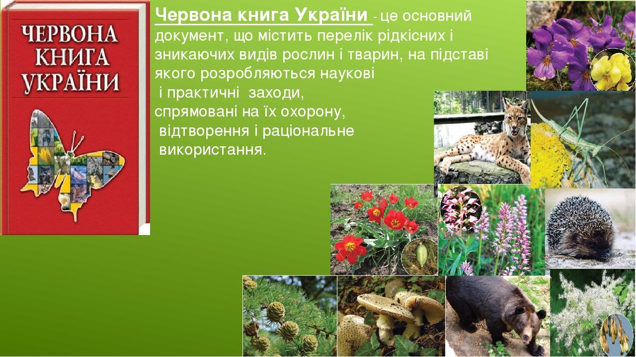 Червона книга України - це основний документ, що містить перелік рідкісних і зникаючих видів рослин і тварин, на підставі якого розробляються науко...
