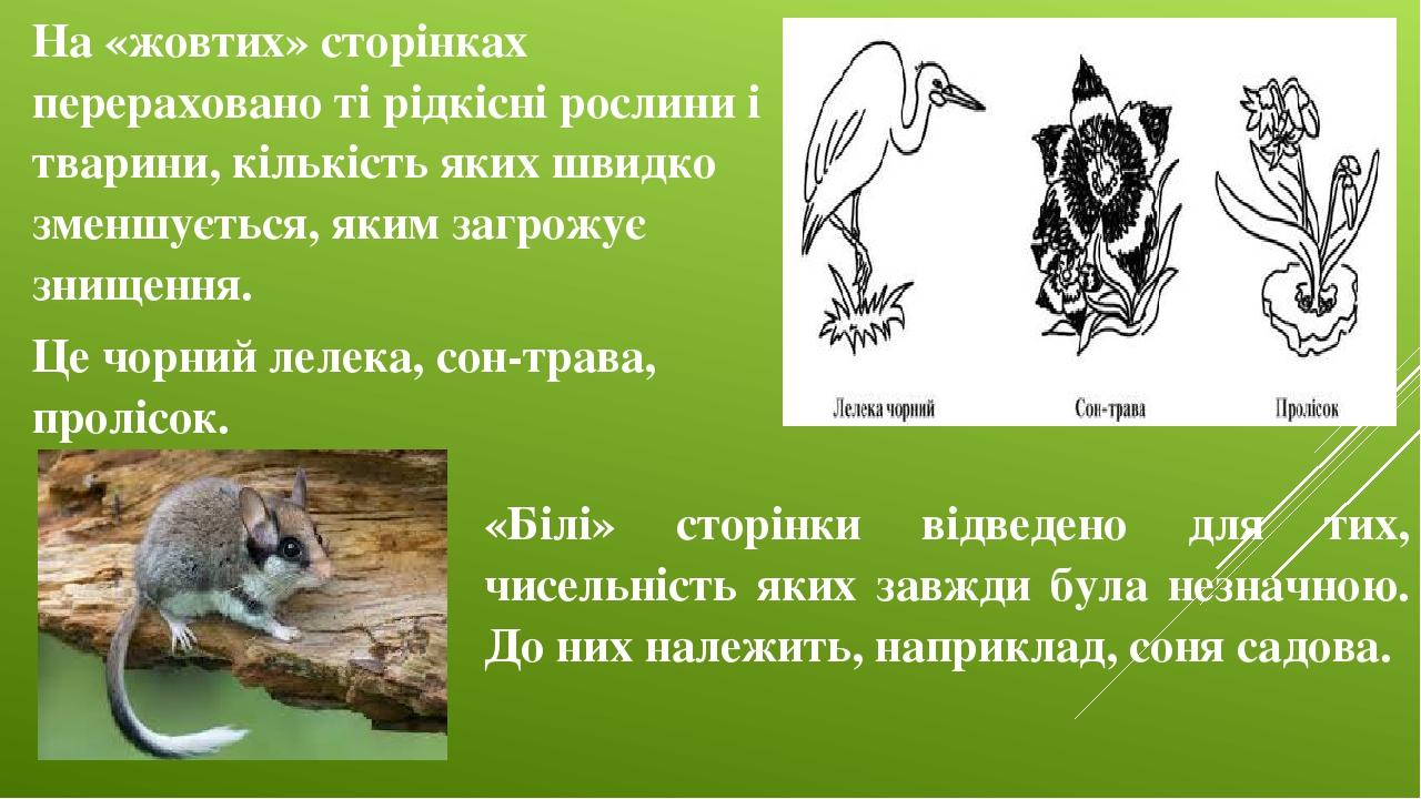На «жовтих» сторінках перераховано ті рідкісні рослини і тварини, кількість яких швидко зменшується, яким загрожує знищення. Це чорний лелека, сон-...