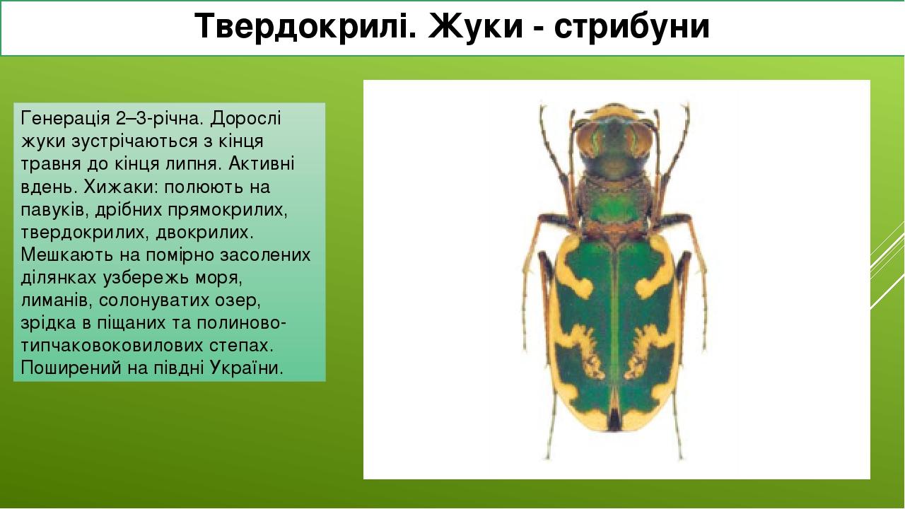 Твердокрилі. Жуки - стрибуни Стрибун Бессера Генерація 2–3-річна. Дорослі жуки зустрічаються з кінця травня до кінця липня. Активні вдень. Хижаки: ...