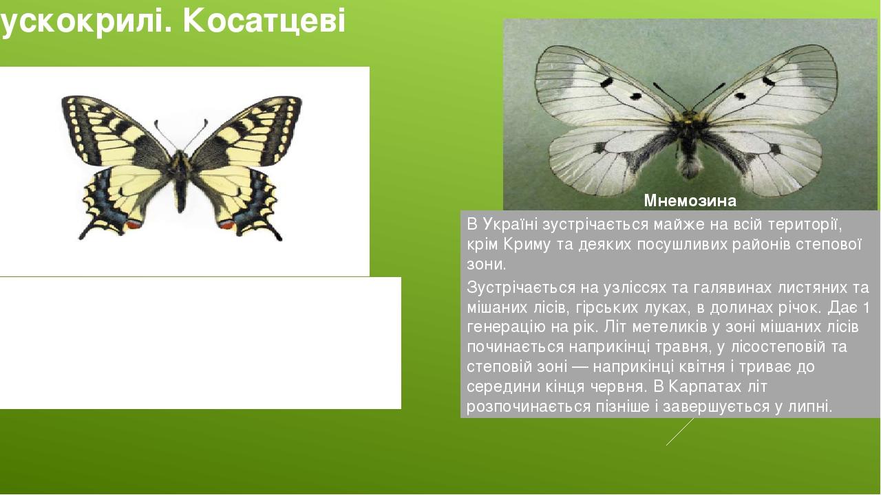 Лускокрилі. Косатцеві Махаон В Україні зустрічається повсюдно. Мнемозина В Україні зустрічається майже на всій території, крім Криму та деяких посу...