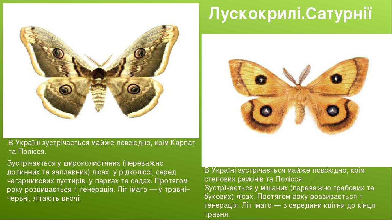 Лускокрилі.Сатурнії В Україні зустрічається майже повсюдно, крім Карпат та Полісся. Сатурнія руда В Україні зустрічається майже повсюдно, крім степ...