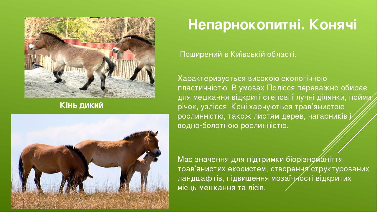 Непарнокопитні. Конячі Кінь дикий Поширений в Київській області. Характеризується високою екологічною пластичністю. В умовах Полісся переважно обир...