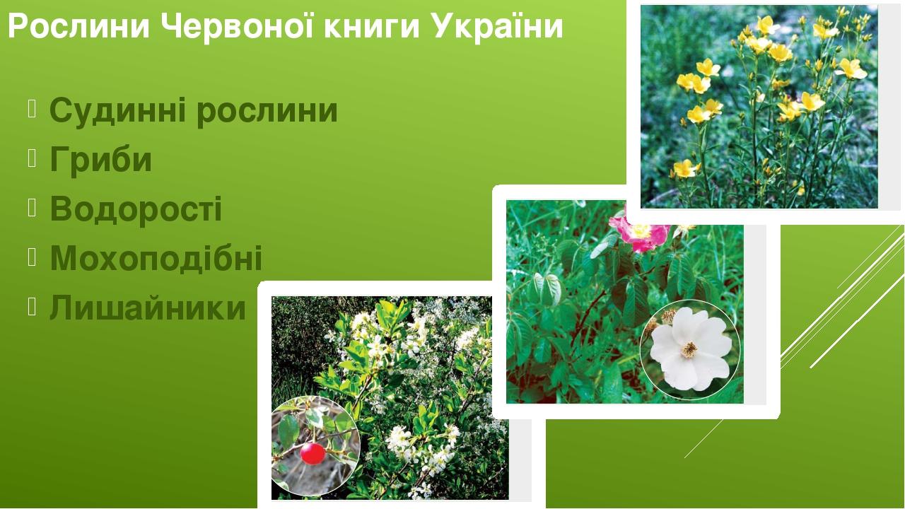 Рослини Червоної книги України Судинні рослини Гриби Водорості Мохоподібні Лишайники