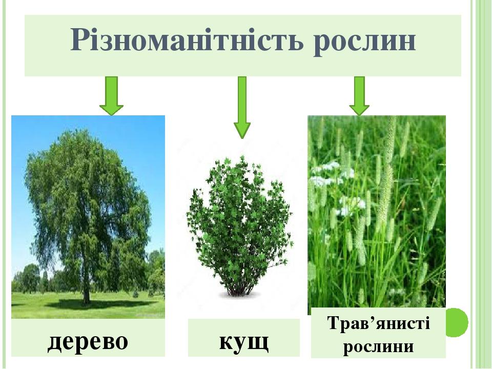 Різноманітність рослин дерево кущ Трав'янисті рослини