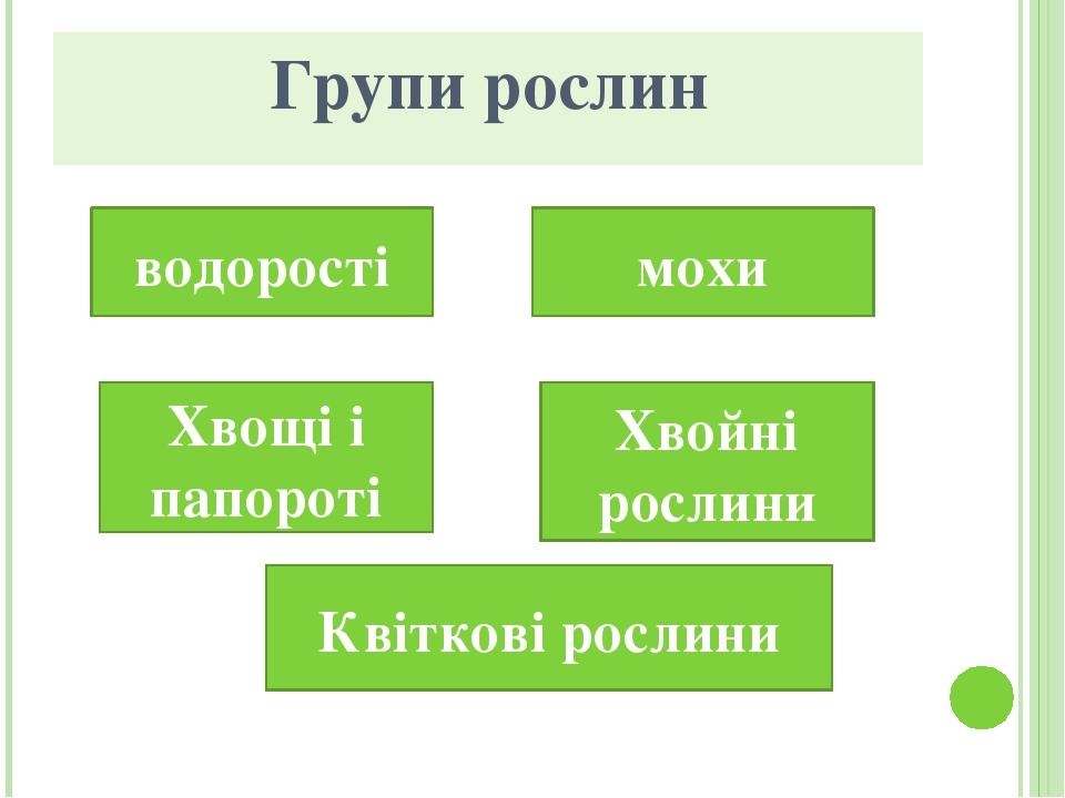 Групи рослин водорості мохи Хвощі і папороті Хвойні рослини Квіткові рослини
