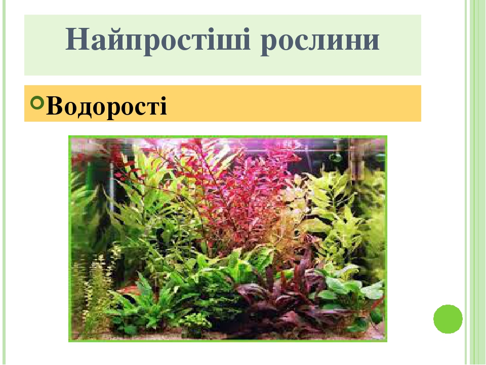 Найпростіші рослини Водорості