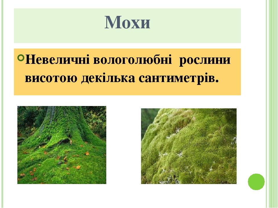 Мохи Невеличні вологолюбні рослини висотою декілька сантиметрів.