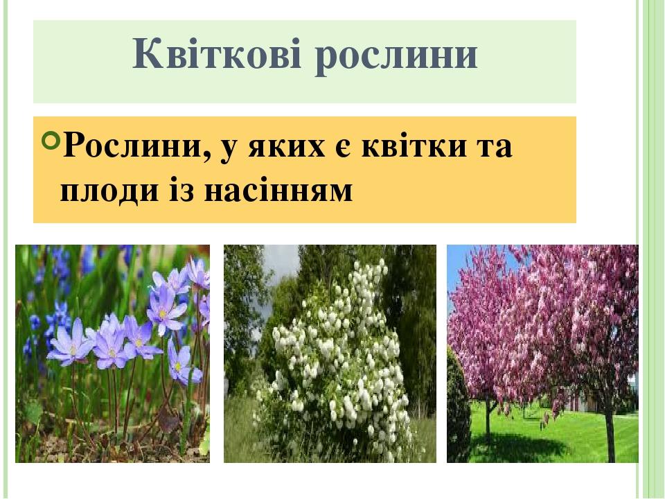 Квіткові рослини Рослини, у яких є квітки та плоди із насінням